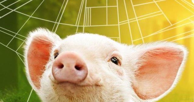 根据猪周期的运行规律,我国猪肉价格上涨至少会持续1年左右的时间