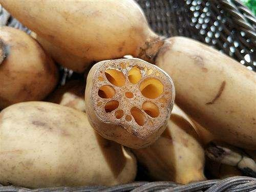 立秋之后要吃藕,七孔藕和九孔藕有区别吗?搭配排骨食疗效果更好