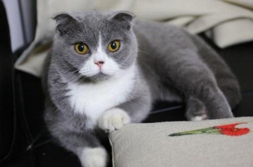 猫咪烂嘴角能自愈吗图片