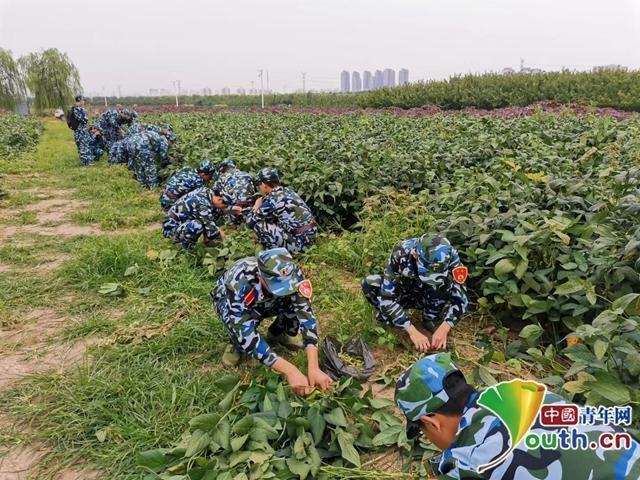 """天津大学开荒10亩""""责任田"""":学生自己种地、收菜、分粮"""