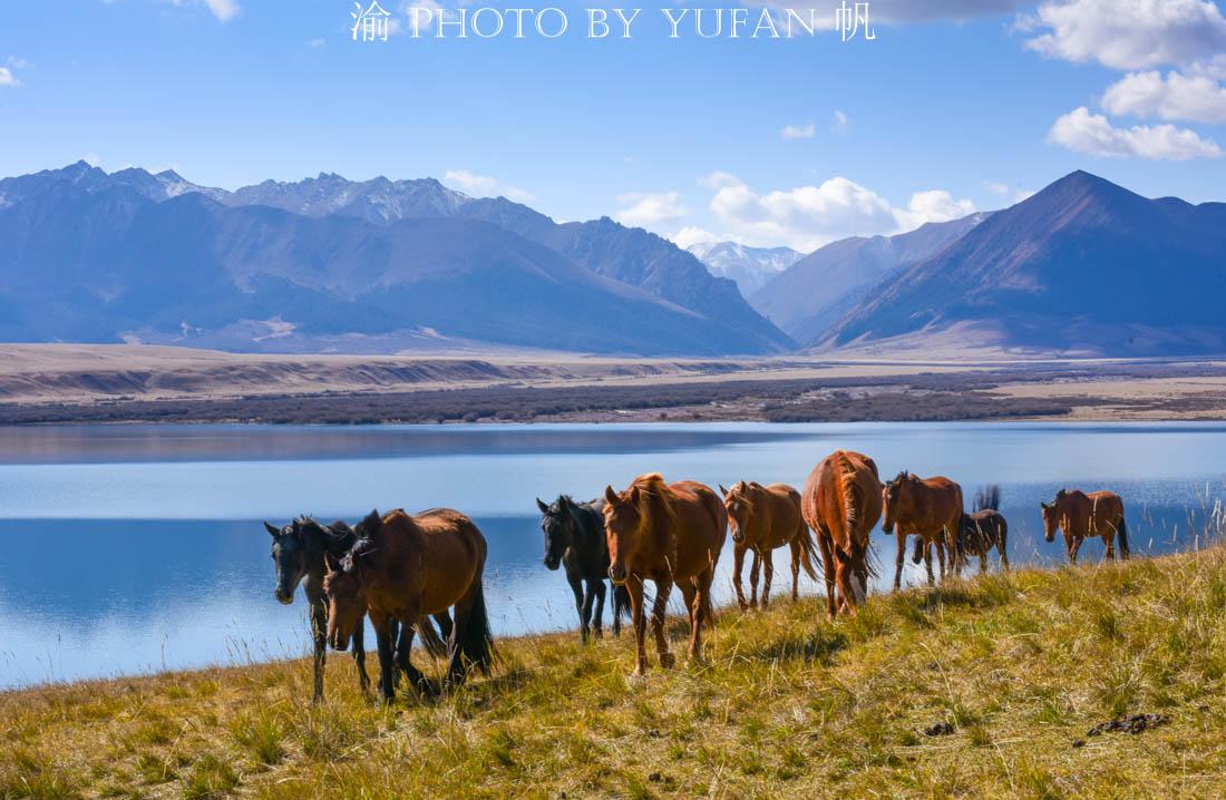 山丹军马场,世界最大最悠久的马场,已有2100年历史,美如仙境