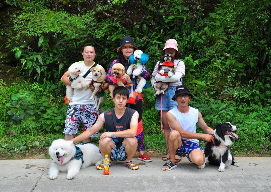 带狗去旅行-百人百宠挺进龙映山,千转百回尽享皖南川藏风光