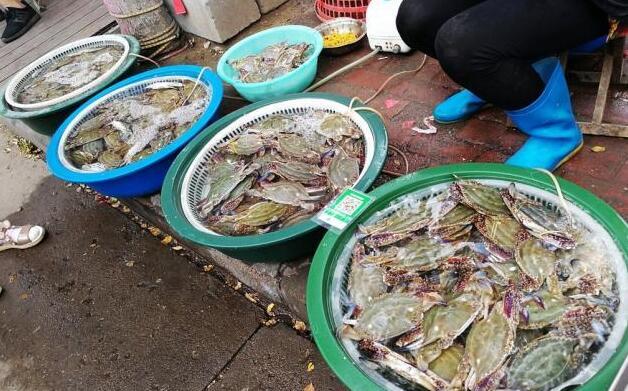 梭子蟹成菜市场海鲜主流,肥大鲜美便宜,小鲅鱼被捕捞可惜