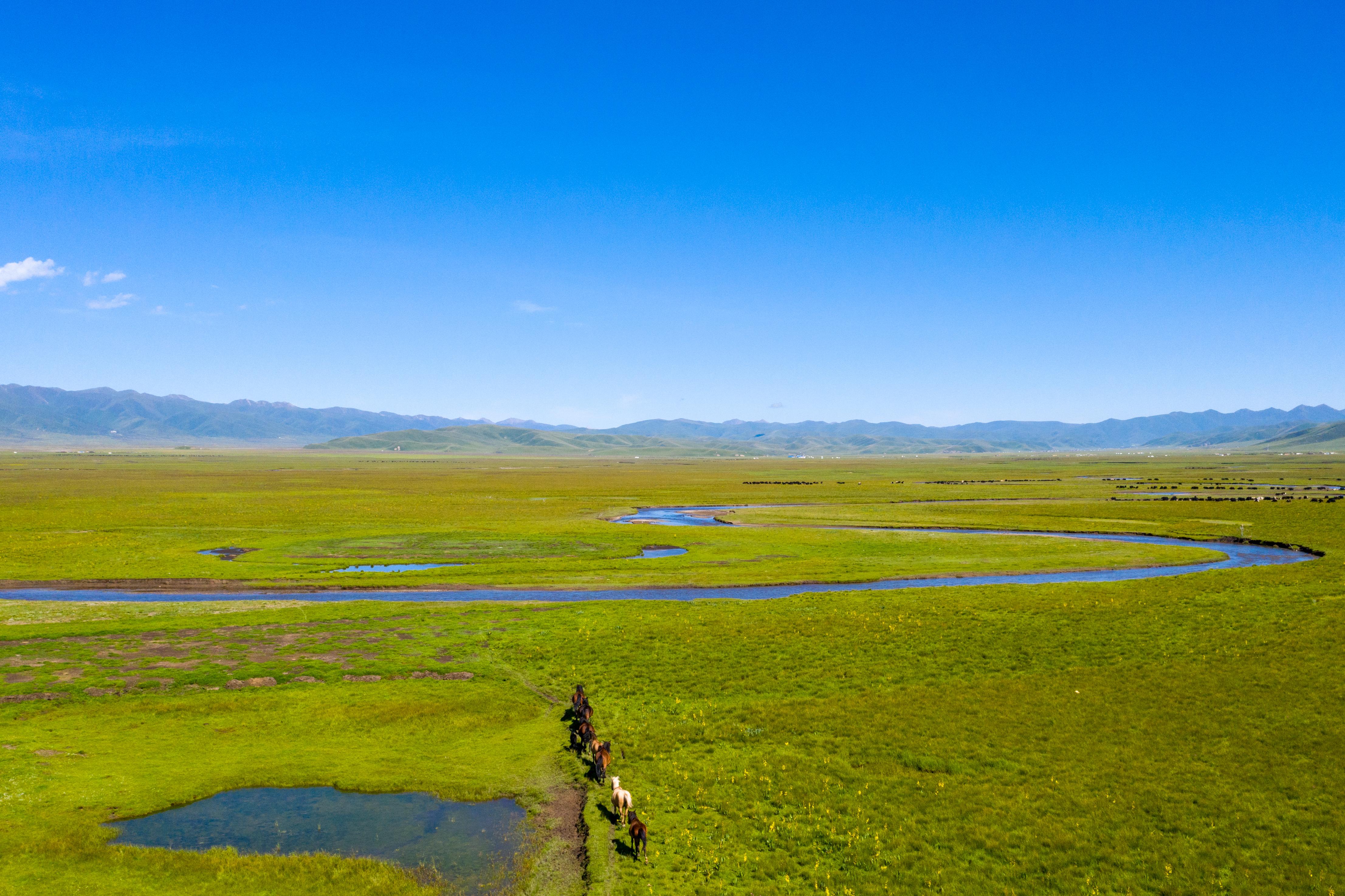 旅人的梦里,是鳞文雷篆的阿万仓草原