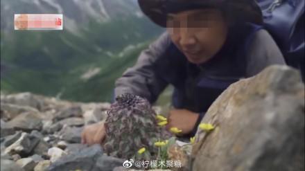4500米海拔珍稀濒危植物 300万粉丝美食博主摘下煮泡面