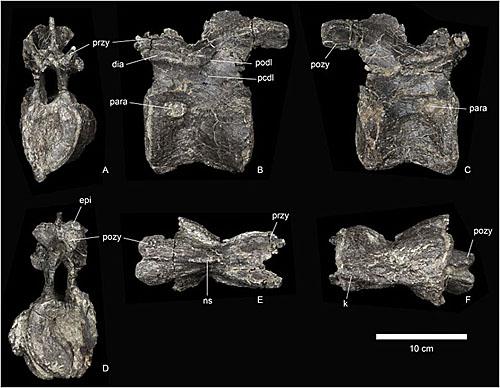 世界上最古老的剑龙化石被发现 英媒:扩大对恐龙演变认识
