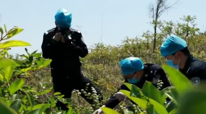 偏僻林区发现两具女尸,双手被绑全身赤裸,复杂关系引来杀身之祸