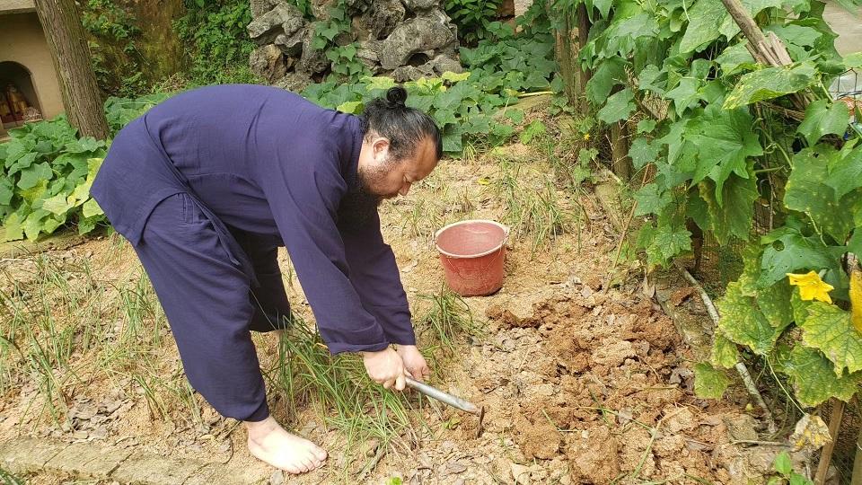 湖南农民无量子传授阳台种菜技巧