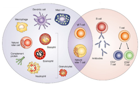 精准百家谈丨张睿:杀死肿瘤细胞,需要这4步