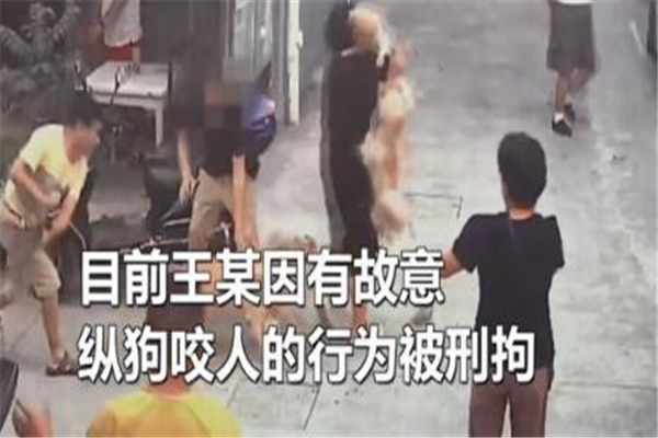 纵狗咬人被刑拘是怎么回事 宠物如果伤人主人该负责吗?_