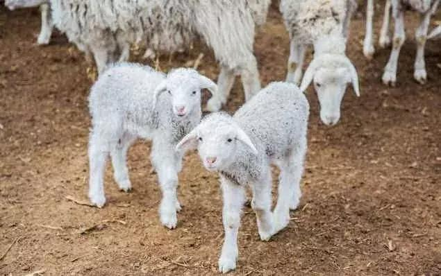 羊棚设计图片大全