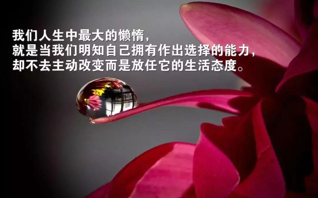 早安心语 不要让昨日的沮丧令明天的梦想黯然失色