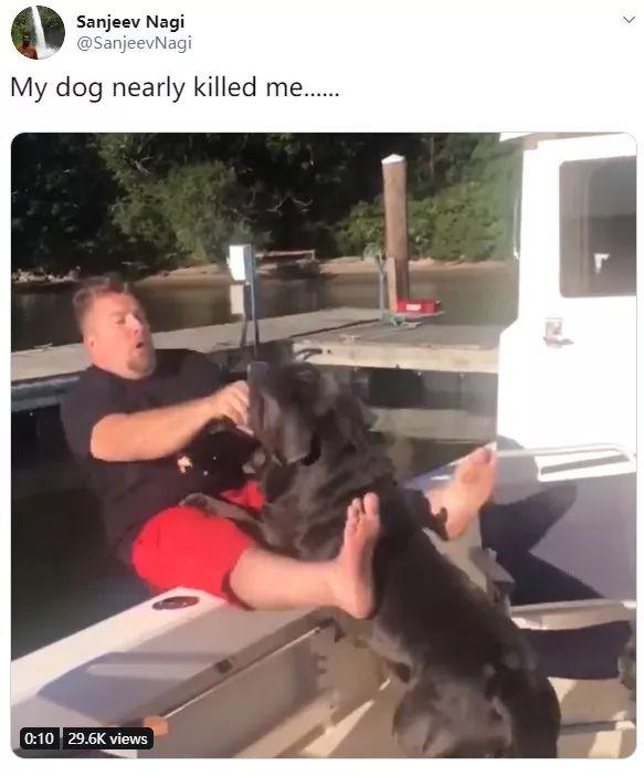 用狗狗练习抱娃,这样的爸爸也太可爱了吧