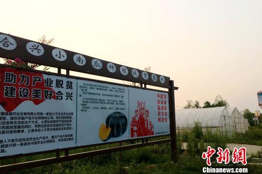 【中国新闻网】大别山贫困山村的蝶变:产业助力驶入乡村振兴快车道