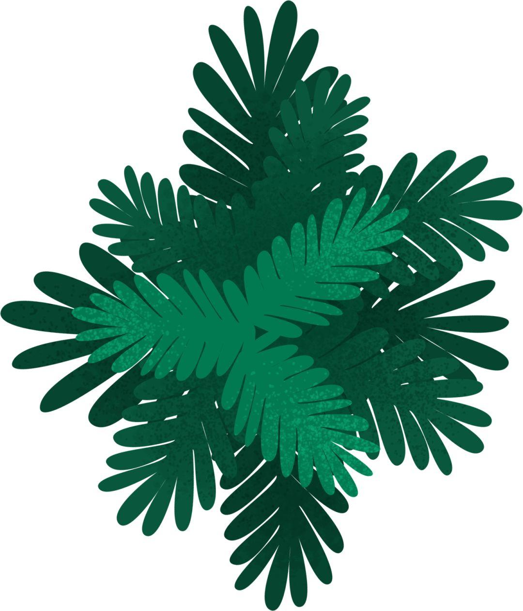中国绿色有机谷 长白山森林食药城 产业发展论坛暨项目对接会在长