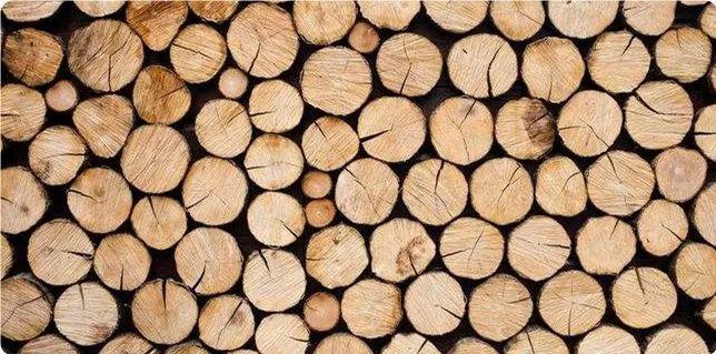 张家港非洲原木市场普遍面获利难 | 一周市场 No.88