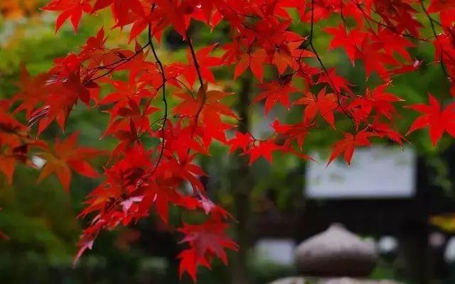 关于秋天的20首古诗词,在最美的秋天里教孩子吧!
