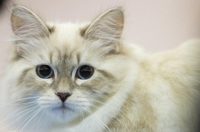 谁说猫咪爱干净 喵星人这些恶心的举动,真的会气死你