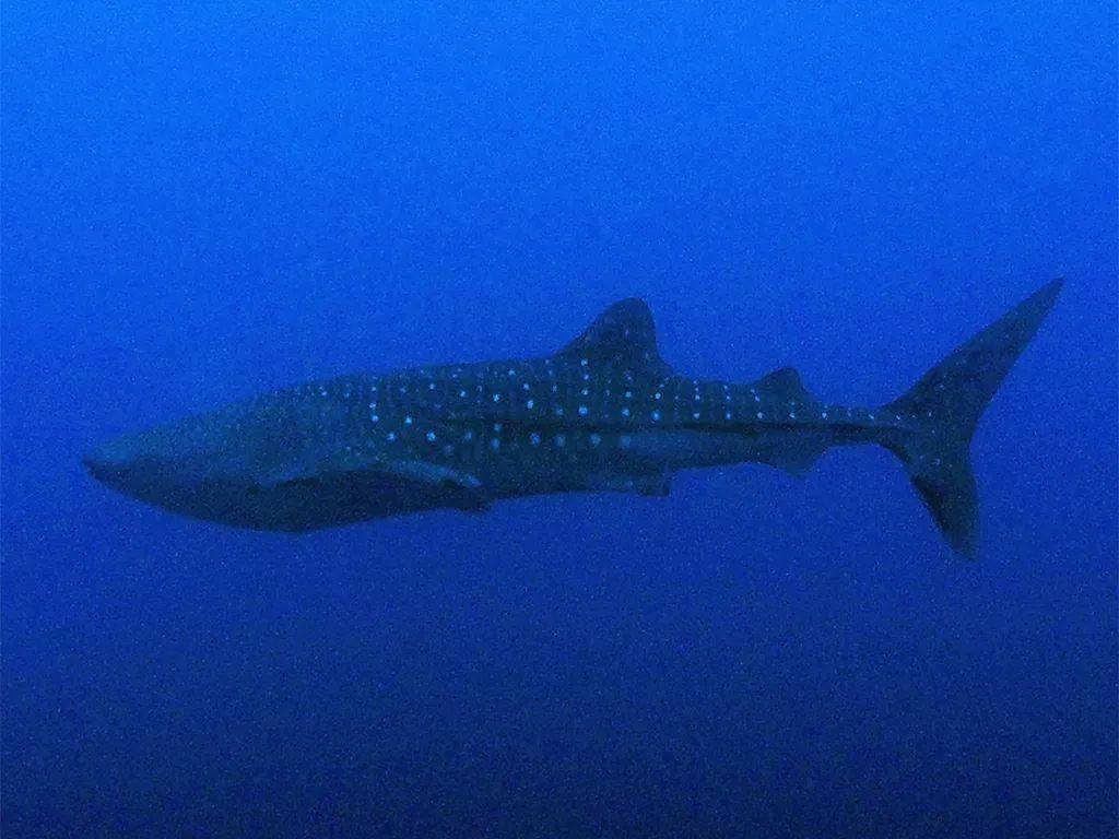 潜水遇到鲨鱼和鱼群风暴!杭州网友见证的水下20米生日