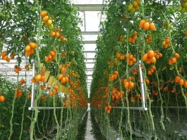 露穴�_2亿农民干不过荷兰22万农民?荷兰农业发达的秘密就隐藏这里!