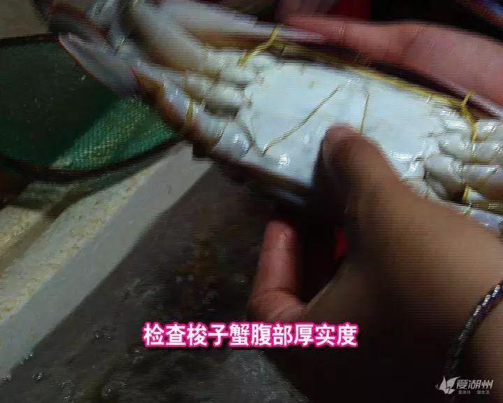 正是吃梭子蟹的好季节,如何挑选不被坑,收藏!