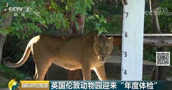 """萌翻了!伦敦动物园迎来""""年度体检"""",19000多只动物内心OS:我太难了..."""