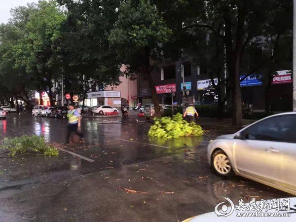 狂风暴雨刮断大树 娄底交警直属一大队交警及时清障保通行