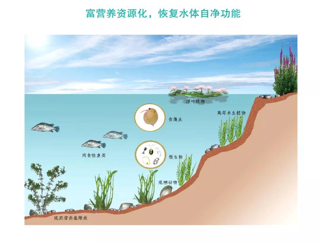 城镇河道生态修复及水处理技术