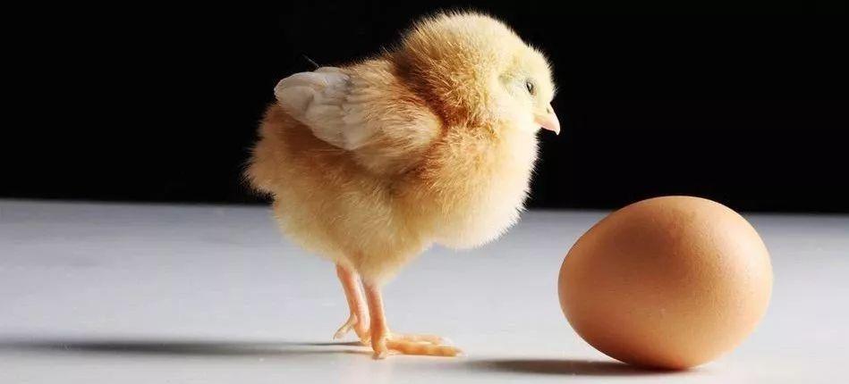 先有鸡先有蛋不知道,但先排卵后来月经知道