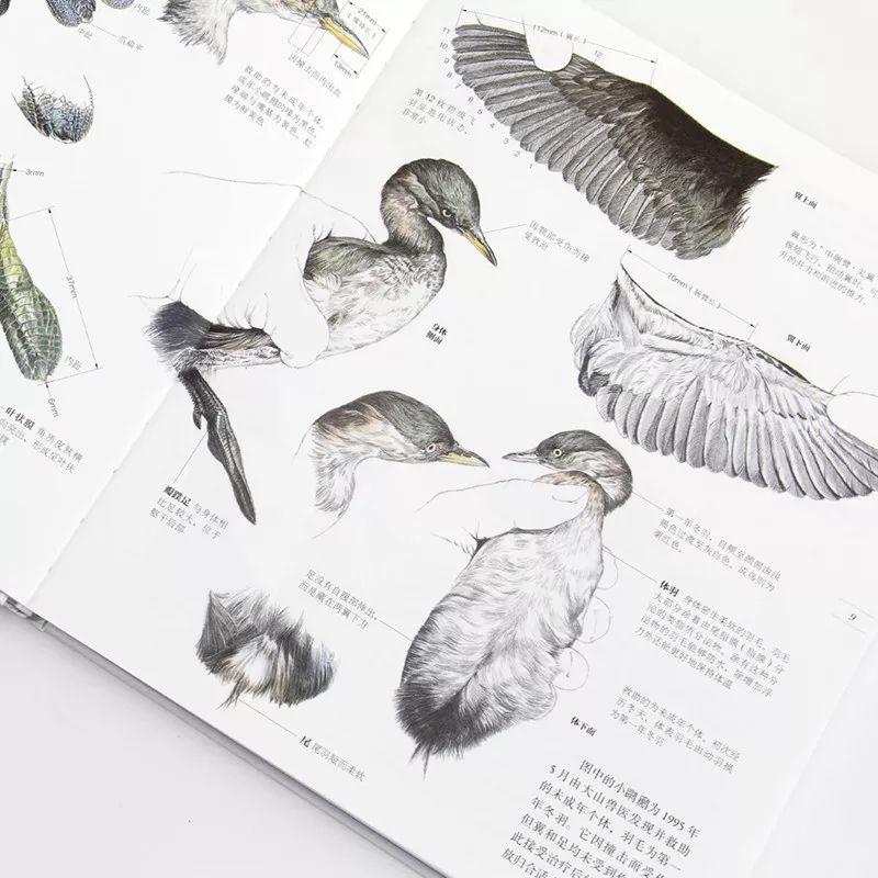 《野鸟形态图鉴》