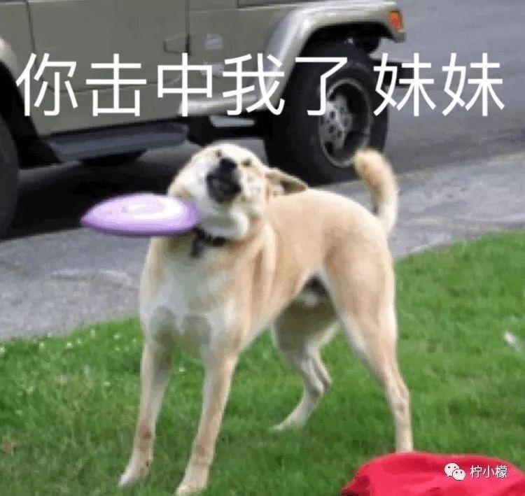 你养的狗子能沙雕到什么程度?哈哈哈哈哈哈哈_品种