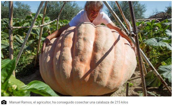 西班牙城市萨莫拉惊现215公斤的巨型南瓜?!