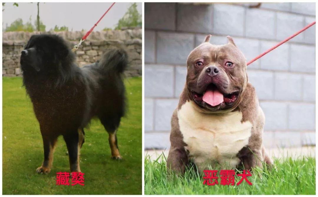 武清建成区内禁养这些烈性犬!