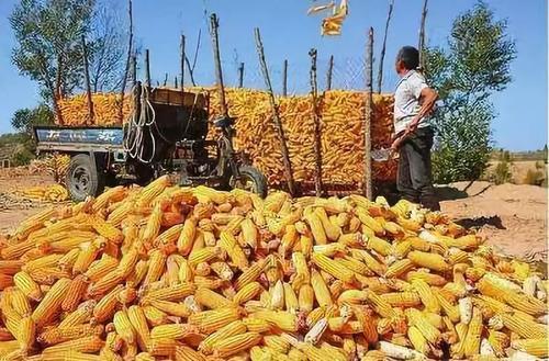 <b>好消息!2019年农村玉米补贴已发放了,最高领取6万,你领了?</b>