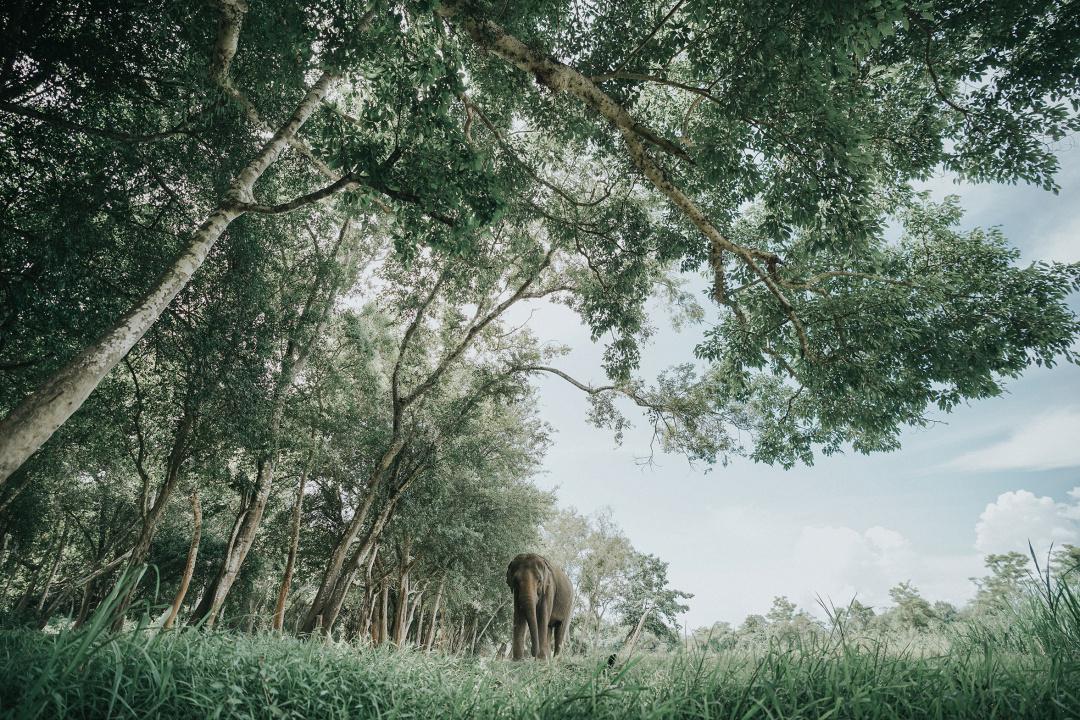 虽然爱莉去过不少动物园,例如国内长隆,美国圣地亚哥动物园,但是大象
