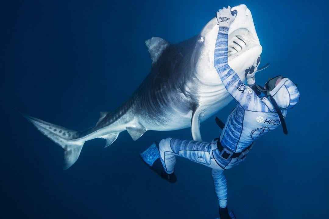 五颜六色: 游戏虎鲨 | 哥斯达黎加舞娘 | 布拉德·皮特