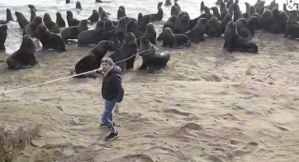 阿根廷一海狮遭轮胎卡头 志愿者成功救援