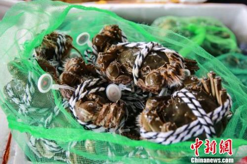 阳澄湖大闸蟹9月23日开捕 产量高于往年