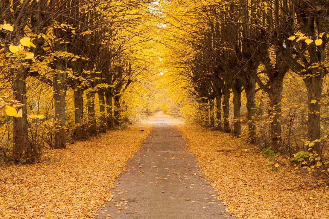 形容秋天的句子唯美 描写秋天景色优美句子