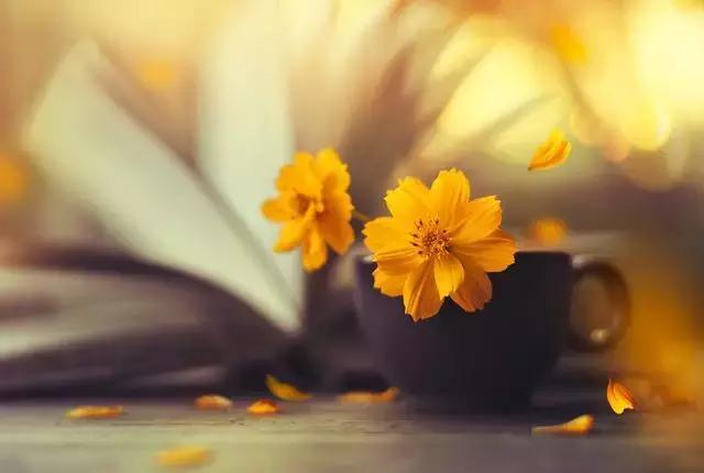 活在这个世上,总有一些事让你烦心,总有一些人让你伤心,如果学不会释怀