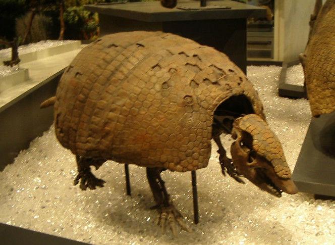 地球上五大灭绝动物,原来鬣狗在中国也泛起过,只不过灭绝了!