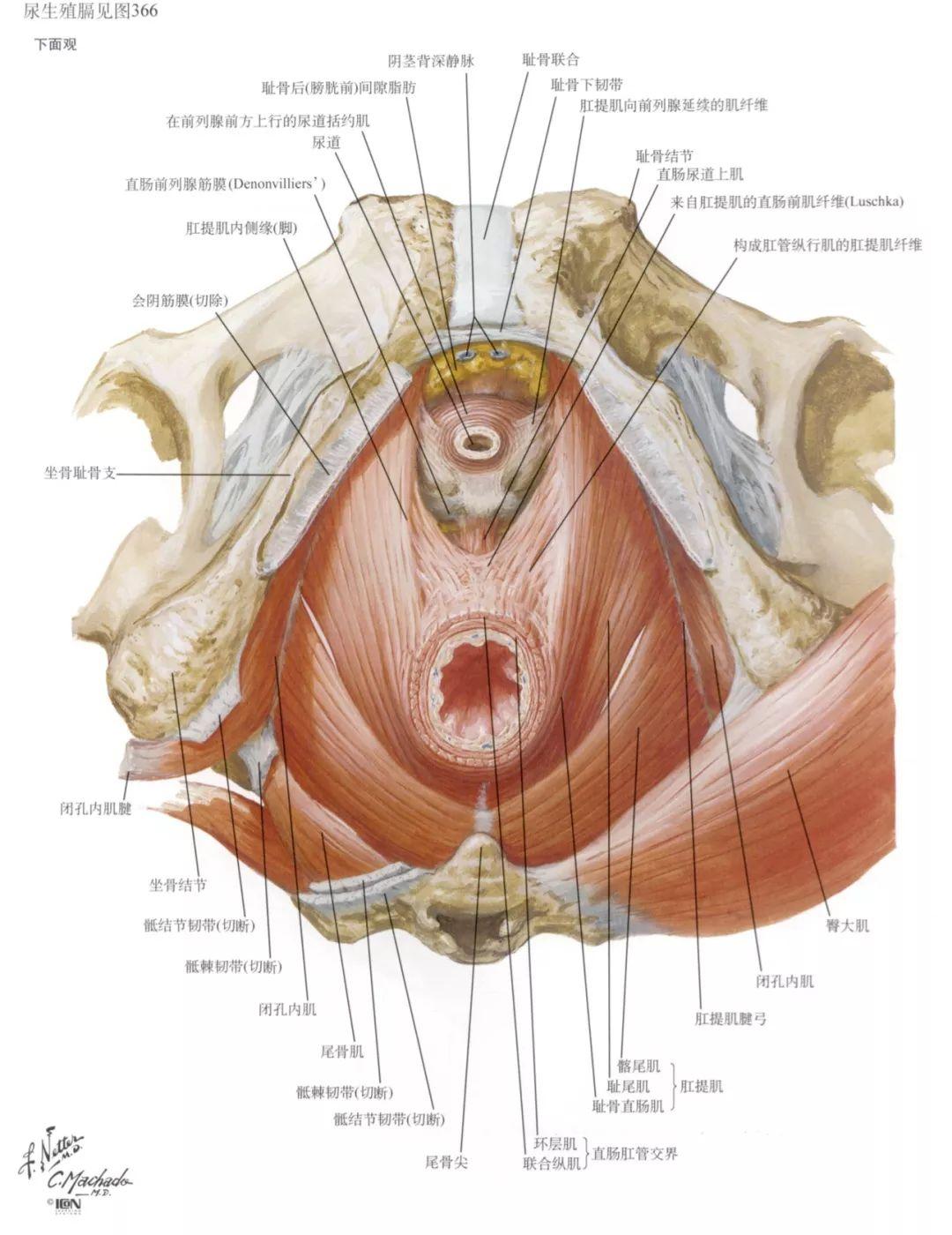 生殖医学专家揭秘胎儿性别是什么时候形成的?详细图解_手机搜狐网