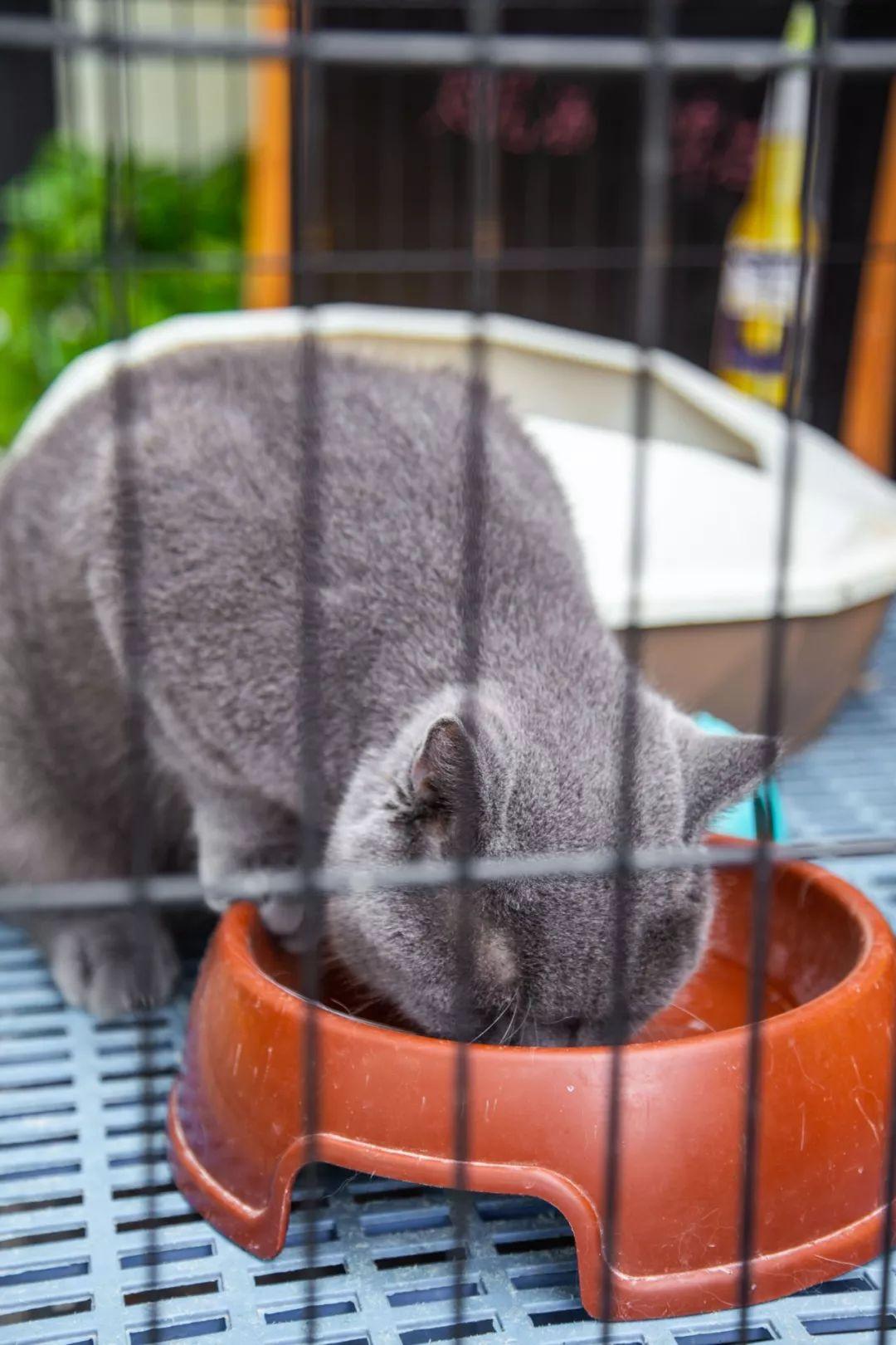小撸撸人免播改fj_藏身五大道自带小花园的西餐厅,撸猫星人强势打卡!