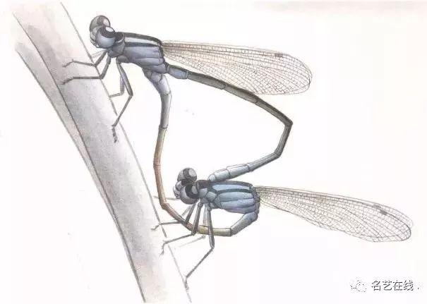 国画技法 工笔蜻蜓 蝈蝈画法步骤示范