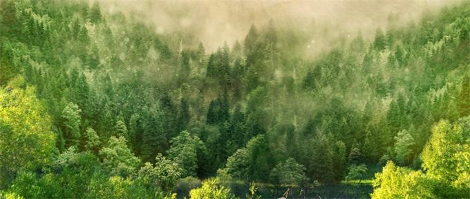 痛心!库克宣布苹果捐款修复雨林 帮助亚马逊热带雨林的保护和恢复_火灾