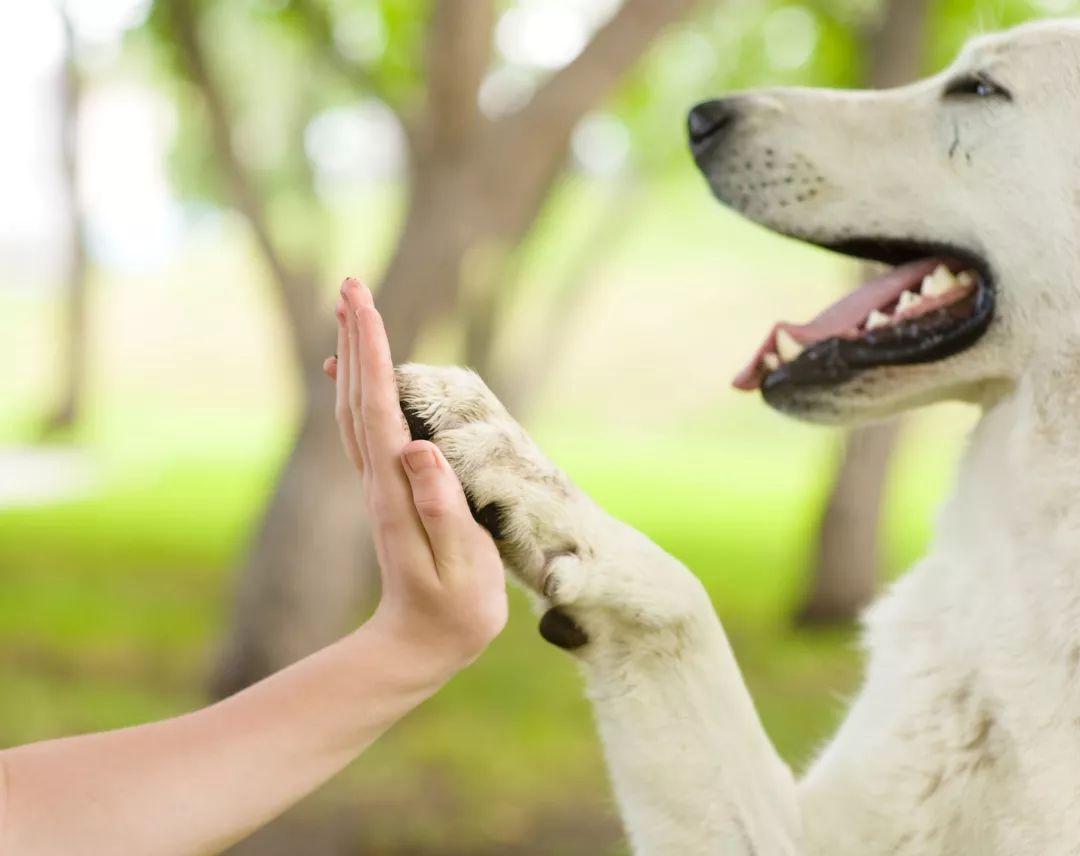 犬药抗癌是鬼扯?不夸张,真相在这里!