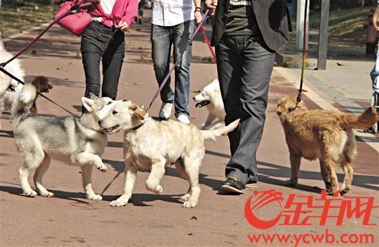 东莞拟规定若犬只伤人不送诊最高或罚款5000元