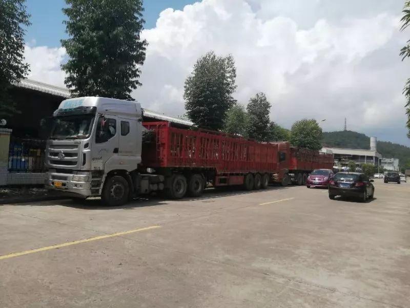 """两辆货车""""分享""""一副车牌,被江门交警查获,货车司机面临拘留!"""