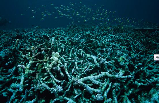 """<b>游客海底潜水找到大量""""骨架"""",靠近后才发现它们的真面目</b>"""
