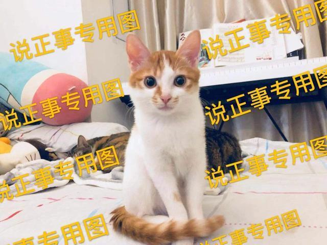 如何选择一款猫砂?用经验告诉你